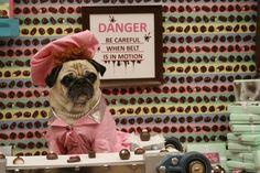 Pug-O-Ween #halloween #puglove http://www.dallasnews.com/entertainment/photos/20121022-pug-o-ween-hits-dallas-with-cleo-pet-ra-pug-o-tron-elvis-pugsley-and-more.ece