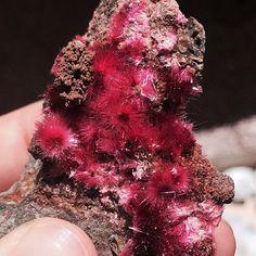 Acicular Erythrite, Bou Azzer, Morocco