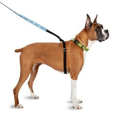 """ThunderLeash 