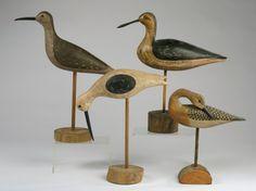 Shorebirds.