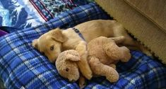 30 Cute Puppies Cuddling With Their Favorite Stuffed Animals During Bedtime. What can possibly be cuter than a puppy sleeping or taking a nap? Little Puppies, Cute Puppies, Cute Dogs, Dogs And Puppies, Baby Dogs, Cute Baby Animals, Funny Animals, Puppy Cuddles, Cuddle Buddy