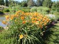 Taglilie 'Fooled Me' Blüte Juni-September 60-70 cm