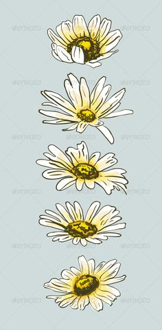 Set of Hand Drawn Camomile Flowers #GraphicRiver Hand drawn vector…
