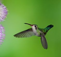 Photographing Hummingbirds in Madera Canyon Arizona – Part I