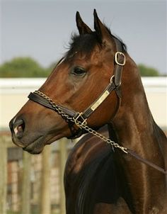 Barbaro, you had the heart of a champion... You are missed.