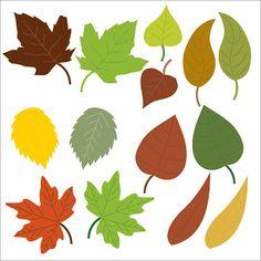 Descopera plantele: Frunza - Partea 2