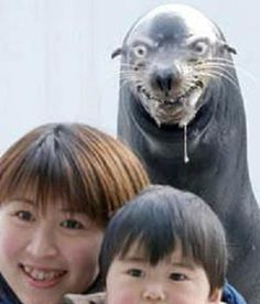 funny+photobombs | The 11 Funniest Animal Photobombs [Gallery]