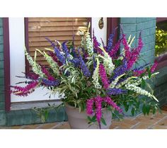 Cottage Farms 3-pc. Flutterby Multi-Color 3-in-1 Butterfly Bush ...