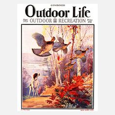 Outdoor Life September 1928, $112, Vintage Illustrations by Replay Photos !!