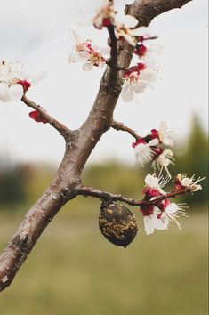 Dandelion, Wallpaper, Flowers, Plants, Dandelions, Wallpapers, Plant, Taraxacum Officinale, Royal Icing Flowers
