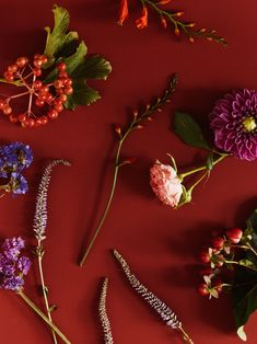 Atmospheric flowers, berries and branches make a wholly autumnal bouquet Crocosmia, Fall Bouquets, Fall Flowers, Aster, Green And Gold, Berries, Seasons, Classic, Veronica