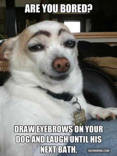 Here are some funny videos of funny dogs. Hope these funny dog videos will make you laugh. A funny dog always cheers me up. So check out these dog . Funny Cute, Haha Funny, Funny Dogs, Funny Animals, Cute Animals, Funny Memes, Funny Chihuahua, Funny Videos, Silly Dogs