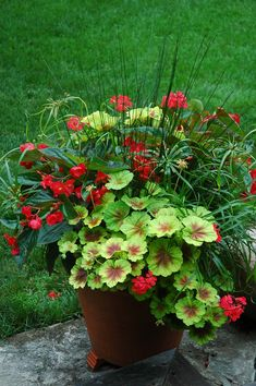 Best Front Door Flower Pots to Liven Up Your Home With - Here you will find a lot of pretty cool front door flower pot ideas. Best Front Door Flower Pots to Liven Up Your Home With - Here you will find a lot of pretty cool front door flower pot ideas. Container Flowers, Flower Planters, Container Plants, Garden Planters, Container Gardening, Outdoor Planters, Planter Pots, Balcony Garden, Pot Jardin