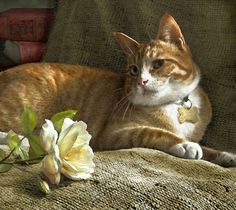 Still Life with Orange Tabby and Roses - Artist Dianne Woods