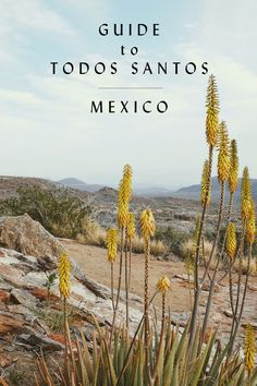 A Spring Guide to Todos Santos San Jose Del Cabo, Cabo San Lucas, Todos Santos Baja California, Mexico Destinations, Travel Destinations, Places To Travel, Places To Visit, Moving To San Diego, Sustainable Tourism