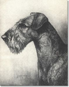 Airedale Terrier by Nina Scott Langley