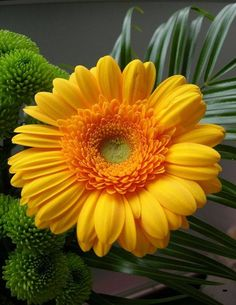 Easy To Grow Flowers, Happy Flowers, Romantic Flowers, Growing Flowers, Amazing Flowers, Planting Flowers, Beautiful Flowers, Sunflowers And Daisies, Tulips Flowers