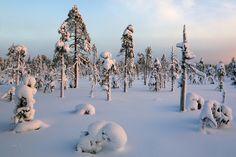 #184 Snowy Trees by Juhani Syväoja (Finland)