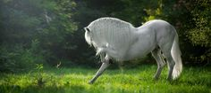 """scarlettjane22: """" http://www.photo-equine.com/ Katarzyna Okrzesik Photography """""""