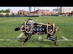 DARPA's Cheetah Bot Is Off The Leash http://www.activistpost.com/2014/09/darpas-cheetah-bot-is-off-leash.html