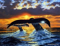 A pair of whales are lobtailing against the backdrop of a beautiful ocean sunset in Derk Hansen's Deep Water Nomads. It is believed that whales slap their tails as a form of communication. Buy this wh