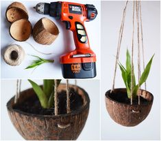 coconut shell plant holder. plant bowl for your flower :)