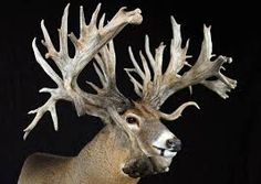 whitetail deer world record-SR