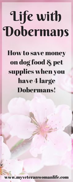 Life with Four Dobies - How I Save Money on Dog Food and Pet Supplies - My Veteran Woman Life | Entrepreneur, Blogger, Master Saver