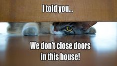 Door closing of any kind is off limits. #catfacts