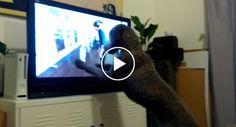 Cão Entusiasma-se Demais Com o Que Vê Na Tv Que Acaba Por Destruí-la http://www.funco.biz/cao-entusiasma-demais-ve-na-tv-acaba-destrui-la/