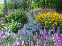 Liatris, black-eyed Susan, joepye weed, Russian sage, white phlox, red bee balm and variegated grass