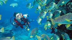 Would you want to dive into realms of aqua world? #Snorkeling #ScubaDiving #Malvan