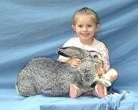 45 Best Flemish Rabbits Images Giant Rabbit Flemish Giant