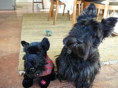 Scottie dog with her stuffed scottie dog