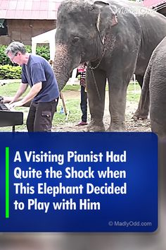 This elephant may be trying to get to play in Carnegie Hall - listen to her 'playing' piano for the first time. Funny Animal Videos, Funny Animals, Cute Animals, Asian Elephant, Baby Elephant, Different Types Of Animals, Animal Rescue Stories, Carnegie Hall, Animal Antics