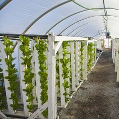 Aquaponics DIY Indoor - Systems In Easy Aquaponics System Across The Uk - Knowded Aquaponics System, Aquaponics Greenhouse, Backyard Aquaponics, Hydroponic Gardening, Hydroponics, Container Gardening, Gardening Tips, Types Of Vegetables, Growing Vegetables