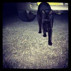 暗闇から 黒猫伸びつつ こんばんは - @blaue_fuchs- #webstagram