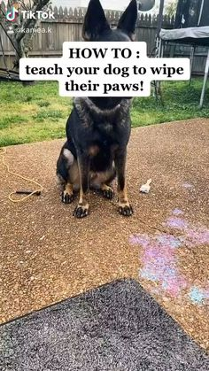 Cool Dog Tricks, Teach Dog Tricks, Tricks For Dogs, Funny Dogs, Cute Dogs, Funny Animals, Cute Animals, Dog Training Tips, Brain Training