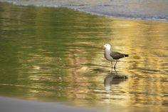 Seagull On Golden Beach by Mauricio Gonzalez Teran on 500px