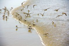 Birds in the Tide - Old Orchard Beach Maine - 5 x 7 print on Etsy, $18.00