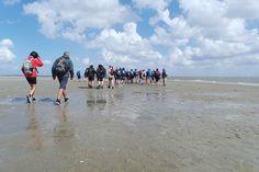 Wadlopen op het Boschwad. - Foto: wadden.groningen.nl