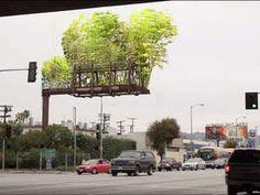 """Bambusgärten auf Reklametafeln  In Los Angeles versucht die Initiative die Stadt mit einem neuen Konzept etwas grüner zu machen: Die Gruppe """"Urban Air"""" installiert Bambus Gärten auf Reklametafeln, Aussichtsplattformen und leer stehenden Gebäuden. Neben dem optischen Effekt soll dadurch langfristig auch die Luft besser werden. www.facebook.com/urbanairproject"""