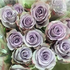 Earl Grey Knight Roses are the darker sister of Earl Grey - they are a lovely lilac colour. Wholesaled 20 stems per wrap. Earl Grey Knight Roses are the darker sister of Earl Grey - they are a lovely lilac colour. Wholesaled 20 stems per wrap. Purple Wedding Flowers, Lilac Flowers, Types Of Flowers, Flower Bouquet Wedding, Pretty Flowers, Purple Flowers, Lilac Grey, Lavender Roses, Grey Roses