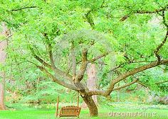 A beautiful view from the tree swing. This shade tree provides a nice cool shaded place to set and watch the water.