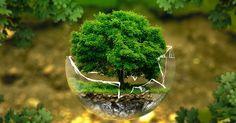 La protection de l'environnement est une cause qui anime de nombreuses personnes sur tous les continents. Cependant, malgré l'importance de ce combat, c'est aussi l'une des causes de meurtres les plus importantes. En 2015, un activiste environnemental a été assassiné t...