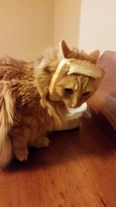 Breaded Cat. She didn't like it too much