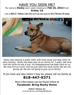 ARLETA, CA - LOST DOG: Rocky is still missing! Rocky is still missing in the Arleta, CA area. He is a 3 y/o lab mix. Wearing a green collar with bone studs and ID tags when he went missing.