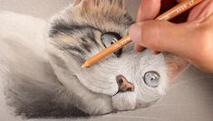 Learn how to draw a cat with pastels in this lesson that uses pastel pencils and traditional soft pastels. Pastel Drawing, Pastel Art, Cat Drawing Tutorial, Chalk Pastels, Soft Pastels, Colored Pencil Techniques, Pastel Pencils, Drawing Projects, Realistic Drawings
