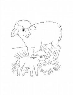 Sheep Mother and Lamb coloring page from Sheep category. Select from 31927 printable crafts of cartoons, nature, animals, Bible and many more. Baby Coloring Pages, Animal Coloring Pages, Free Printable Coloring Pages, Lamb Template, Sheep Drawing, Vintage Coloring Books, English Lessons For Kids, Drawing For Kids, Drawing Ideas