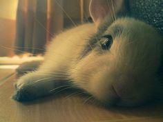 Awwww. What a cute little bunny!!